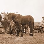 women homesteading west