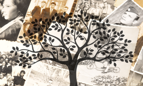 collections family genealogy